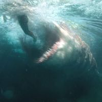 The Meg - Marketing Recap